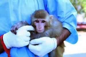 Opičí astronaut v náruči vědce
