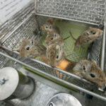 Nepřeživší pískomilové zdroj: biosputnik.imbp.ru