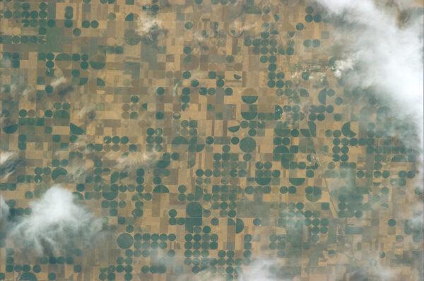 Pole v americkém státě Kansas