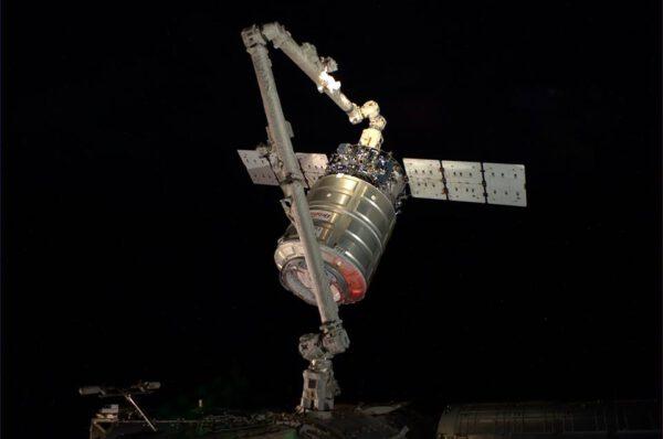 Cygnus zachycen