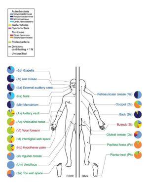 Mikroorganismům se skvěle daří všude - i na našich tělech.