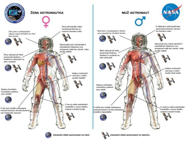 Rozdíly mezi ženou a mužem