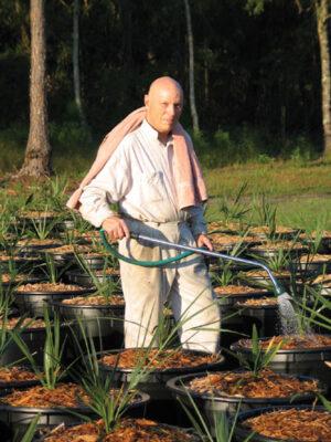 Spokojený Story na své palmové plantáži...