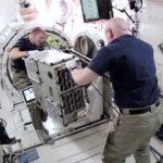 Tim Kopra a Scott Kelly připravují dva cubesaty k vypuštění