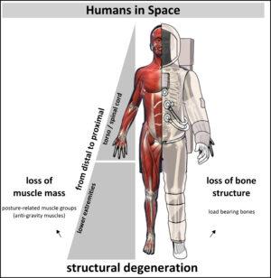 Účinků stavu beztíže na lidské tělo je mnoho.