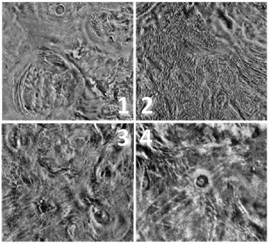 1: koróny Anahita a Pomora, 2: Fortuna Tessera, 3: Arachnoidy v oblasti Bereghinya, 4: kráter Duncan. Veněra 15 a 16. Don P. Mitchell