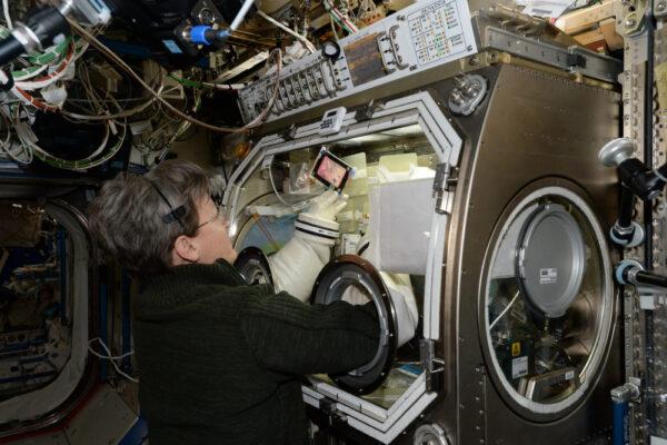 Peggy opět pracuje v inkubátoru Microgravity science glovebox. Celý víkend pracovala s kmenovými buňkami. go.nasa.gov/2n0wBXP