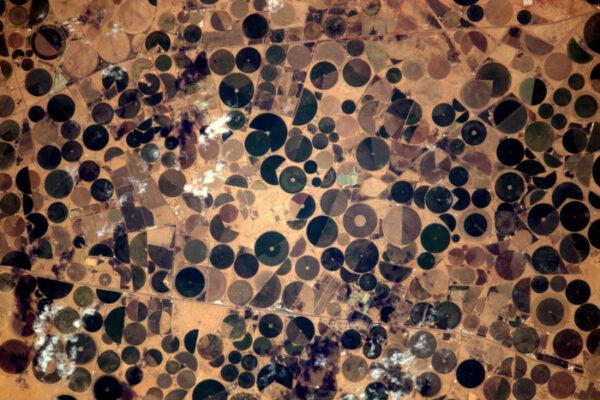 V suchých oblastech částo vidíme tyto rozpoznávací znaky zavlažování, které mi připomínají hrášek. Tato krajina v Saudské arábii má i Pac-Mana, který vypadá, že všechny hrášky sní!