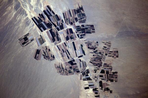 Toto umění v Uzbekistánu mi připomíná Paula Klee (švýcarský malíř, pozn. redakce). Rád bych našel Mondriaana (holandský malíř, pozn. redakce), jelikož máme Mondriaanův rok. Budu dál hledat...