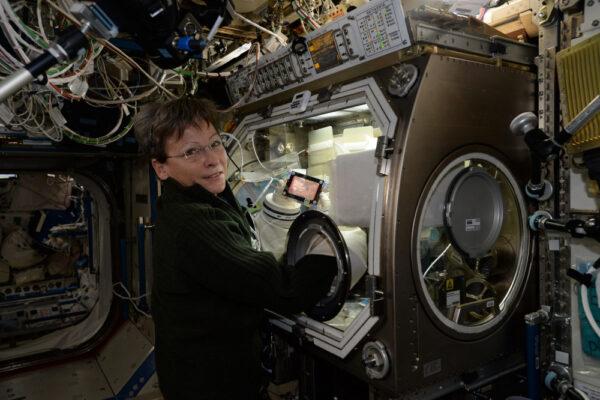 Peggy opět pracuje v inkubátoru Microgravity Science Glovebox. Je jí umožněno tady zůstat další tři měsíce! Nedávno pracovala na experimentech Expanded Stem Cells, o kterém už dřív byla řeč, a Heart Cells, který zkoumá lidské srdeční buňky a jejich změny ve vesmíru, abychom lépe pochopili srdeční choroby a vyhnuli se onemocněním při budoucích misích po Sluneční soustavě.