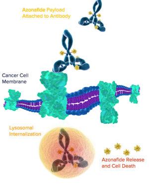 Princip ničení rakovinných buněk