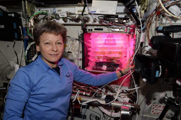 Snězte si svou zeleninu, děti! Čerstvá zelenina je na Mezinárodní vesmírné stanici výjimečná, a když máme sklízet úrodu salátu z našeho disco skleníku, je to pro nás dobrý den.