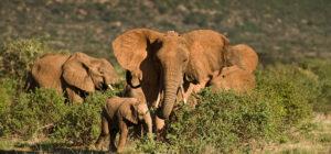 tracking-elephants-fpet