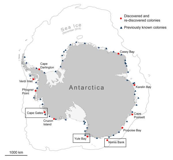 Kolonie tučňáků císařských v Antarktidě. Červenou tečkou jsou vyznačeny nově objevené kolonie.