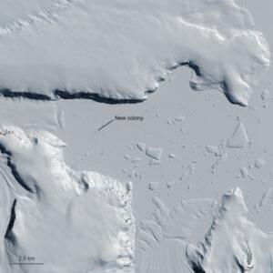 Guanové skvrny prozradily kolonii v lokalitě Yule Bay.