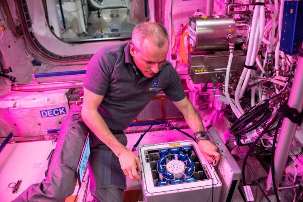Kanadský astronaut David Saint-Jacques instaluje experiment Nano Antioxidants do inkubátoru Kubik v evropském modulu Columbus na ISS. Snímek byl pořízen 7. května 2019