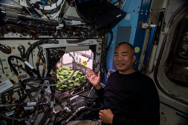Aktuální úroda ředkviček na ISS a Sóiči Noguči