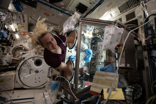 Americká astronautka Kate Rubins při přáci na ISS v zařízení Life Sciences Glovebox. Konkrétně pracuje na experimentu Cardinal Heart, který studuje srdeční tkáně.
