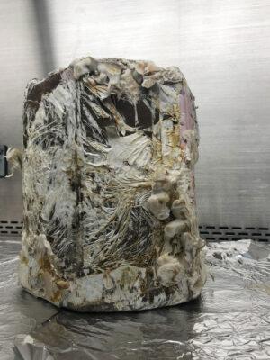 Židle z mycelia vyrostla během 14 dnů.