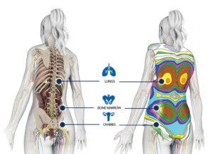 Zobrazení orgánů, které má vesta chránit, v daných místech jsou vrstvy materiálů vhodně zesíleny.