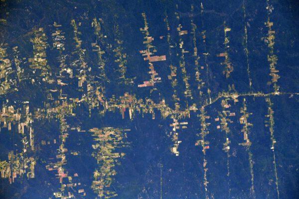 Amazonské deštné lesy. Jeden ze symbolů ekologických katastrof. Důsledkem odlesňování je velmi zřetelný nárůst eroze, a tím i nánosů, které řeky odnášejí do oceánu (proto ta hnědá barva), což dále zhoršuje stav břehů. Negativní ekologická stopa lidstva je mnohem větší, od oceánů a rybolovu, až po městskou infrastrukturu a zemědělství. Zdroj: flickr.com